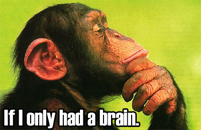 If Only I Had a Monkey Brain
